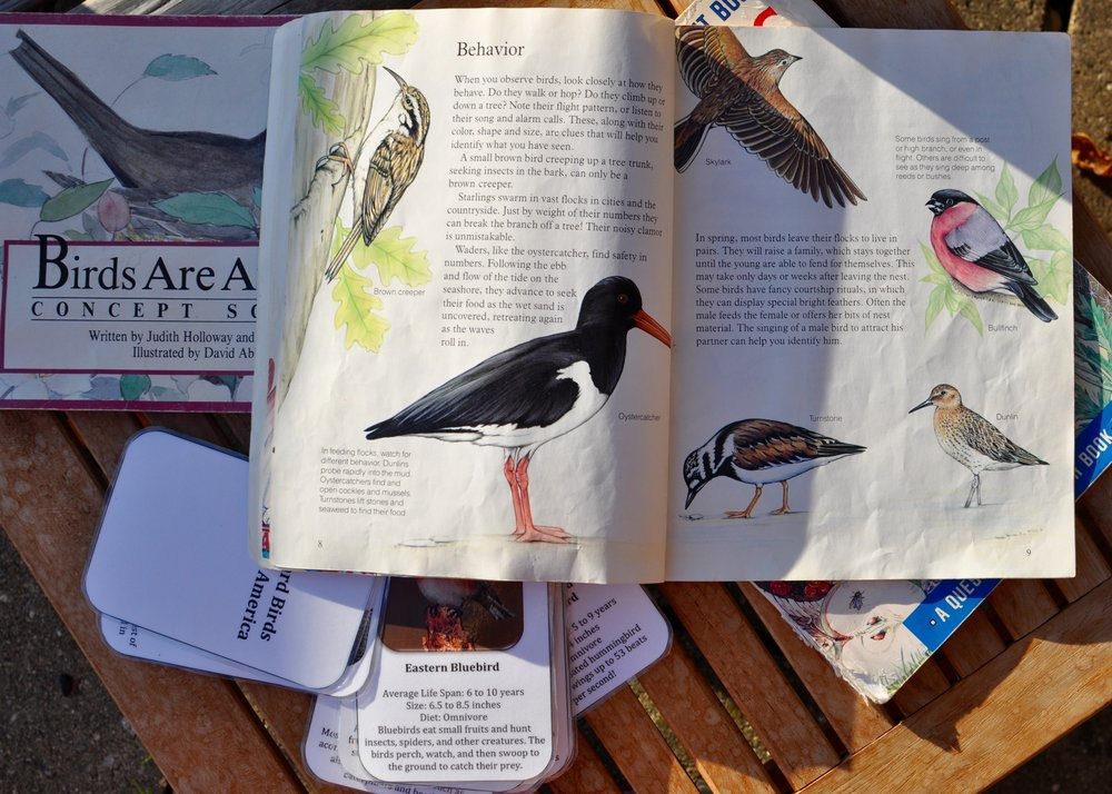 Bird Watching in Primary